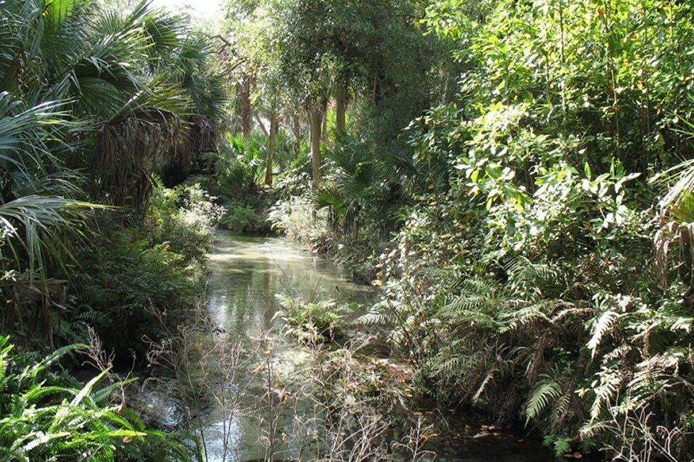 Juniper_Springs_Ocala_National_Forest-a3c098fe74