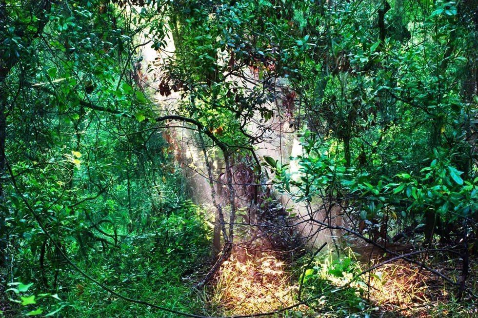 through the forest-1cc0114b46-979f75db5d
